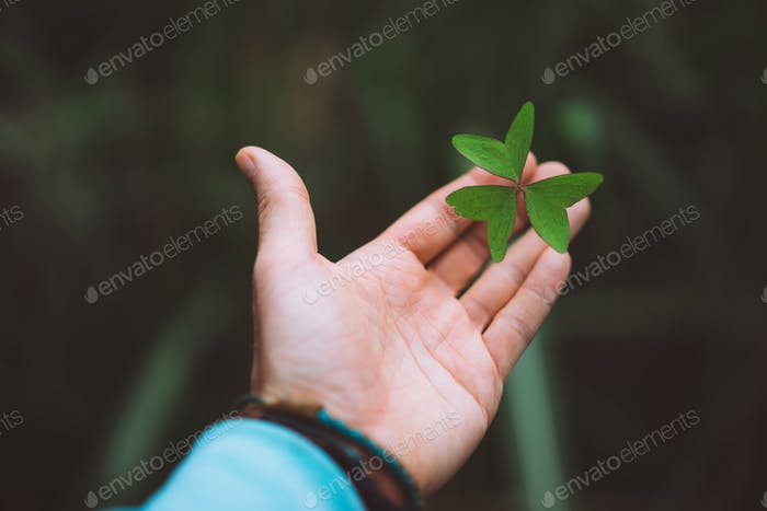 Exotic green clover leave in a man hand palm
