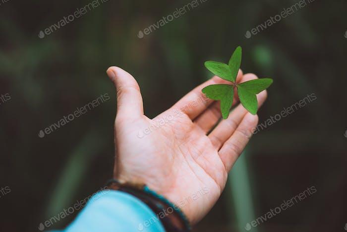 Exotische grüne Klee verlassen in einem Mann Handfläche