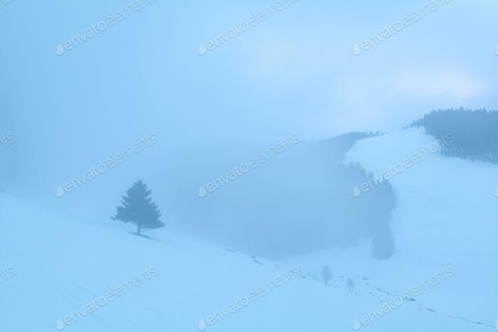 spruce tree in snowy foggy mountains