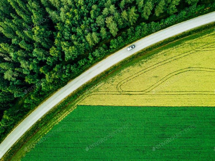 Luftaufnahme des Autos auf der Straße entlang des grünen Waldes und Kartoffel mit gelben Rapsfeldern