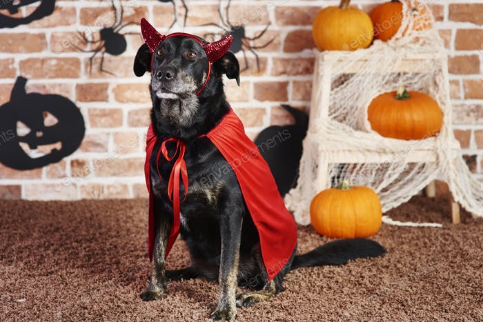 Serious dog in devil costume