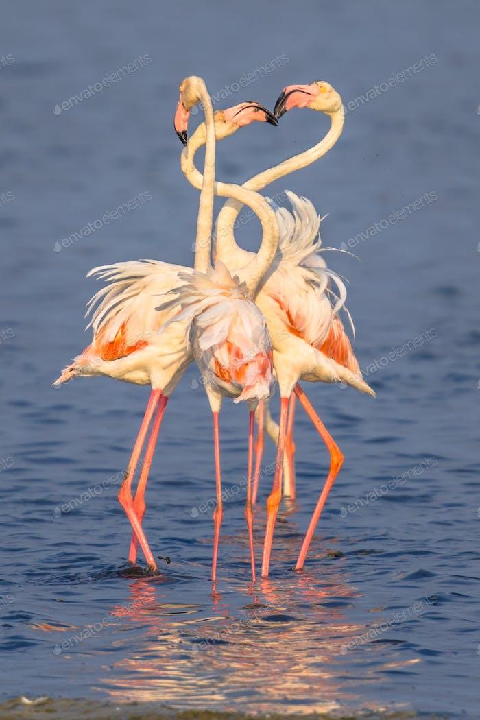 Four Flamingos socialising