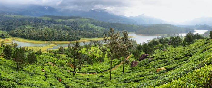 Lake view of the Anayirankal Dam surrounded by tea plantations, Kerala, India