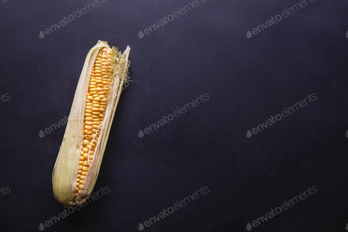 Ripe young corn cob with leaves on black concrete background, copy space