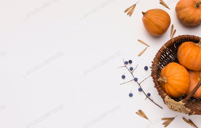 Tasty autumn harvest of orange pumpkins in plate on white