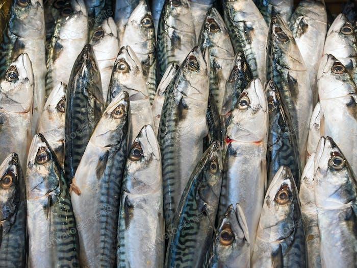 Mackerel Fish at the market