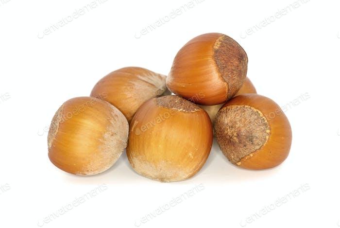 Few hazelnuts