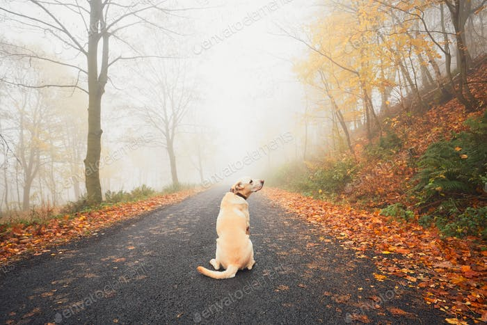 Alone dog in mysterious fog