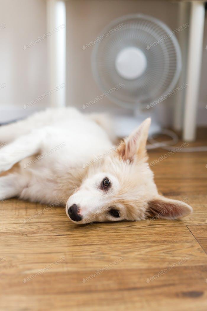 Niedlicher Welpe auf dem Boden unter Ventilator im heißen Sommerraum liegend