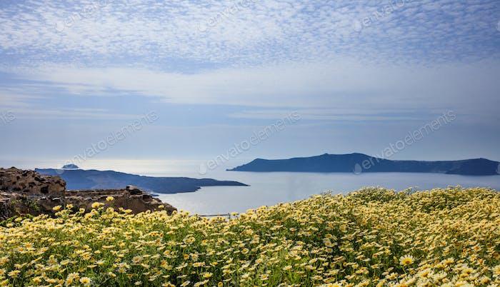 Flowers on the background of Nea Kameni - Santorini Greece