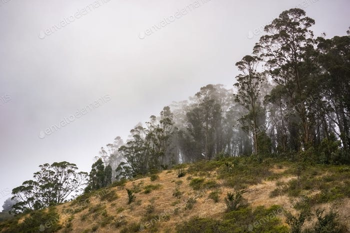 Eucalyptus tree grove
