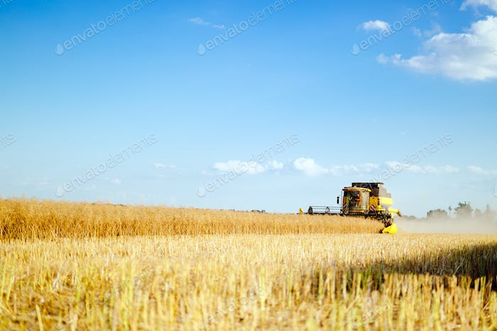 Oat harvesting on fields