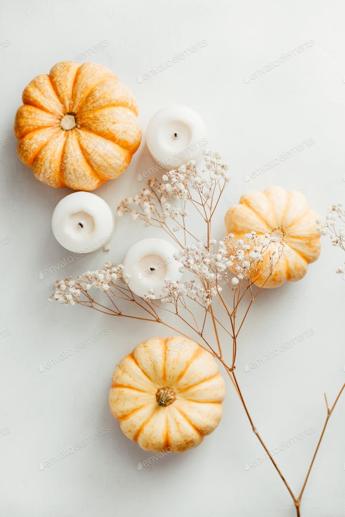 Flat lay composition of small pumpkins
