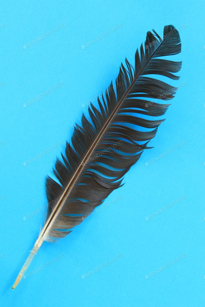 Closeup of black feather