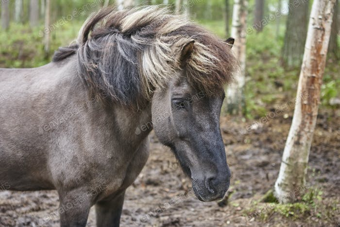 Head horse in a Finland forest landscape. Animal background. Horizontal