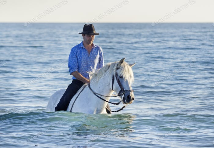 horse rider in the sea