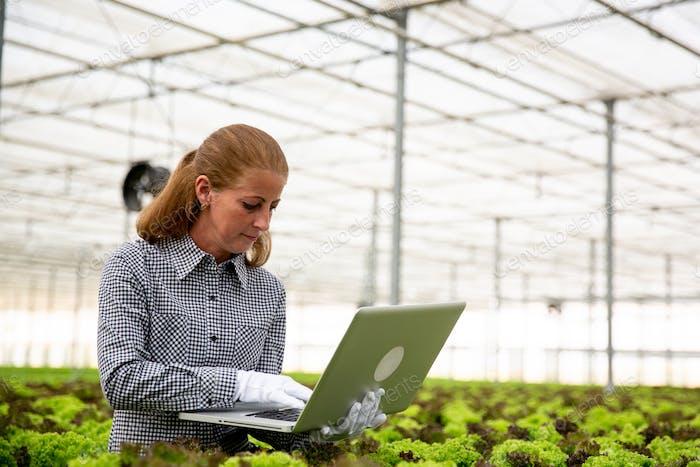 Forscherin Frau bemerkt etwas im Laptop, während Sie neben einer Salatplantage sitzen