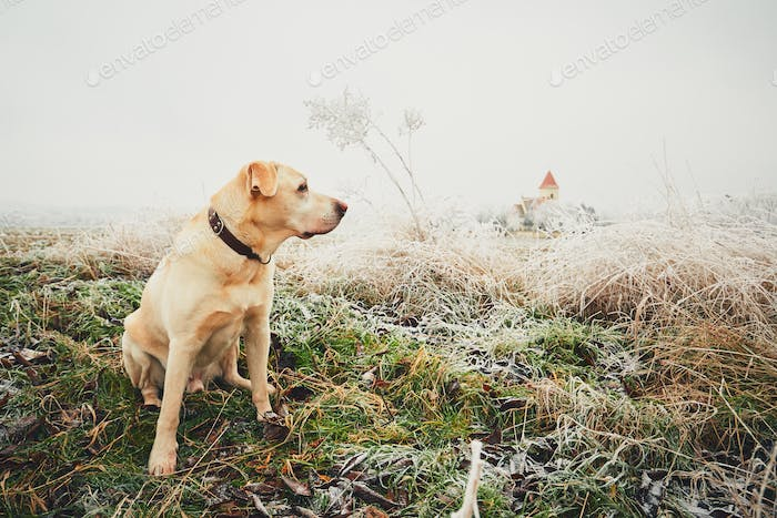 Frosty day with dog