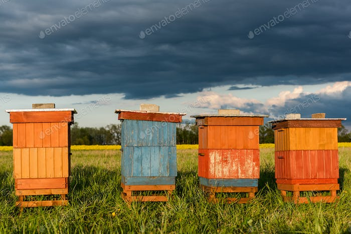Colorful Wooden Beehives in Fields. Organic Honey Production. Beekeeping and Apiary Concept