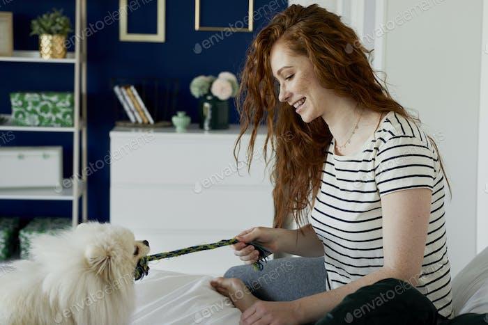 Игривая собака тянет игрушечную веревку