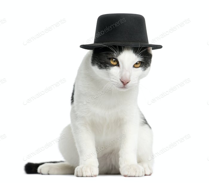 European Shorthair kitten wearing a top hat, sitting, 4 months old, isolated on white