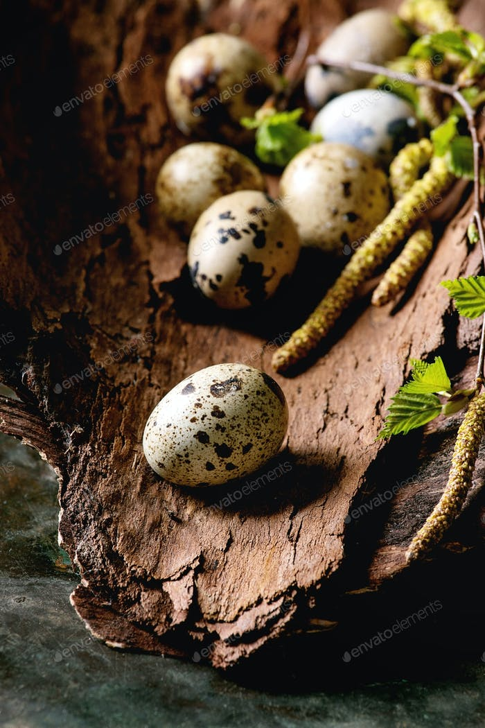 Quail Easter eggs in nest
