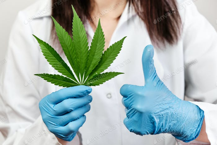 Scientist or doctor shows sign Like of using marihuana plant. Legalization of cannabis in medicine