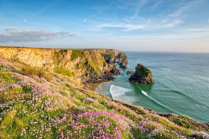 Cornish Cliffs in Summer