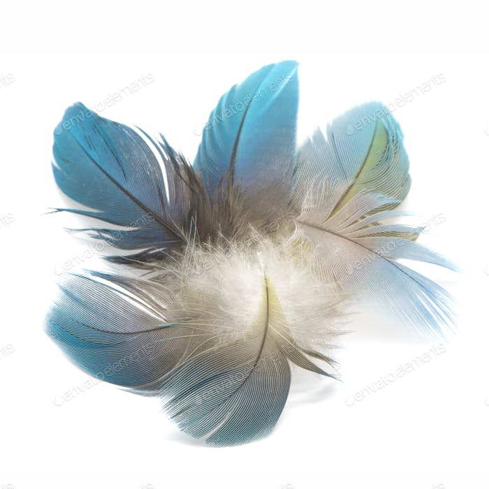 bird feathers isolated
