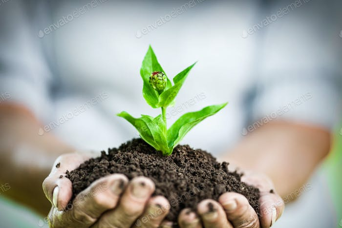 Gartenkonzept Alte Frau hält eine neue Pflanze