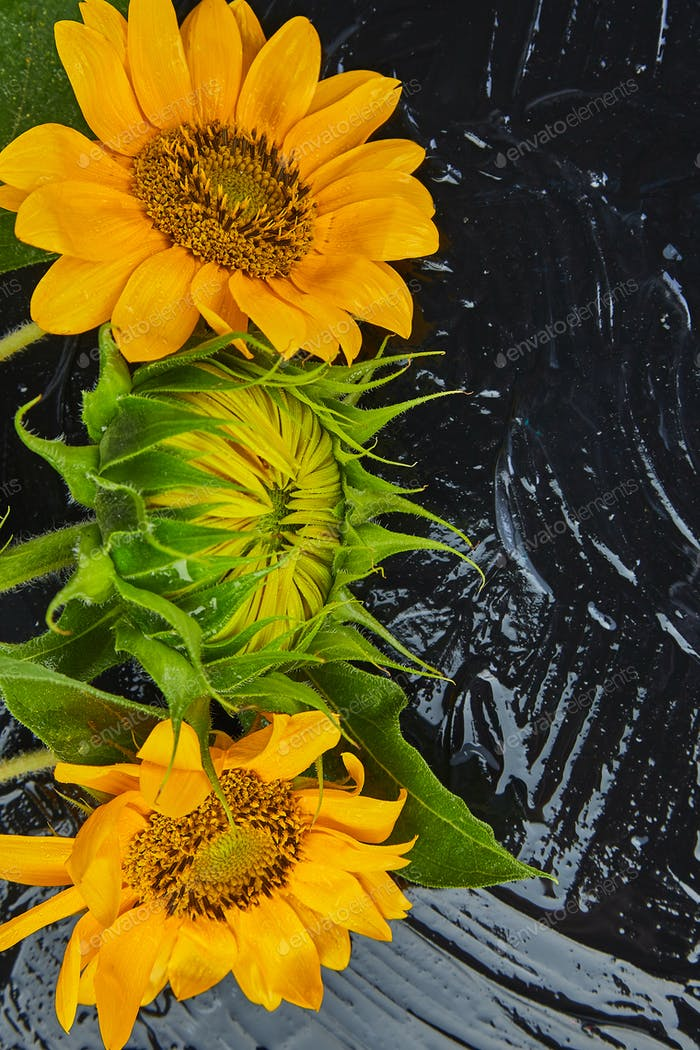 Flowers of sunflower, leaves and seed. Autumn Concept.