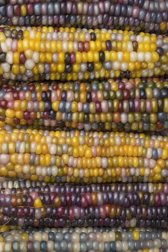 Close up of colorful gem glass corn on cob