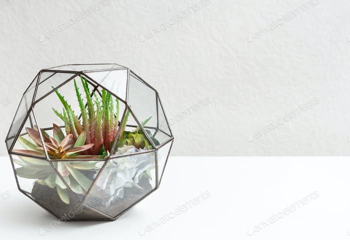 Succulent garden in glass florarium, copy space