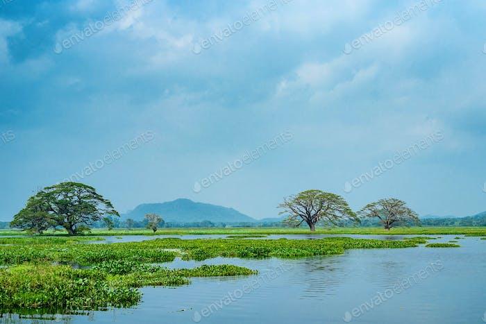 Blick auf den tropischen See mit Bäumen im Wasser