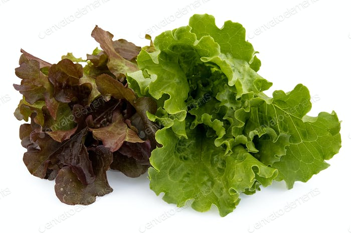 Two kinds of lettuce