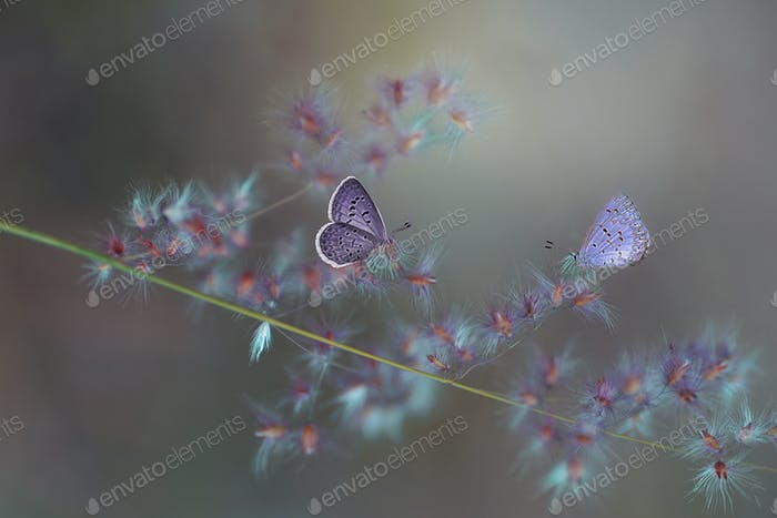 Purple Butterflies Sitting on a Flower