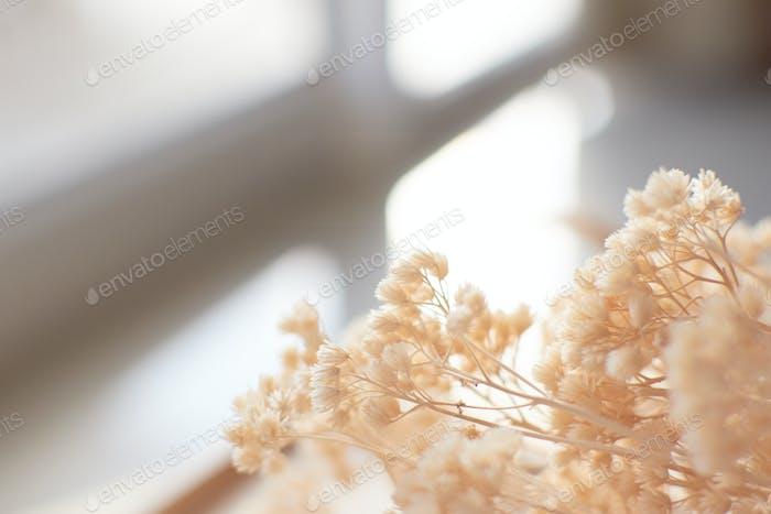 Beige getrocknete Blumen