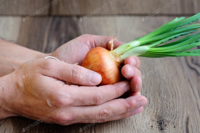 Hands (human farmer chef cook) holding sprouted onions on rustic