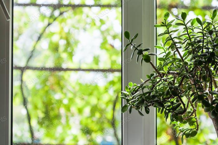 Fenster des Landhauses im Sommer
