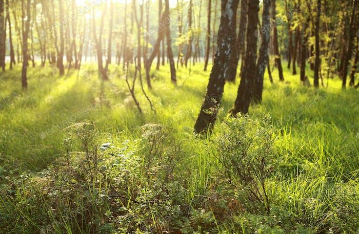 sunlight in green forest