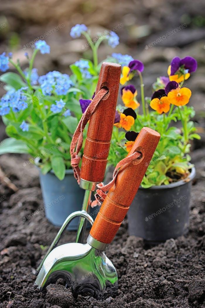 Gartengeräte und Frühlingsblumen im Garten