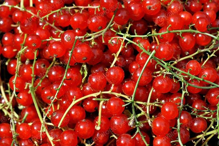 Redcurrant berries