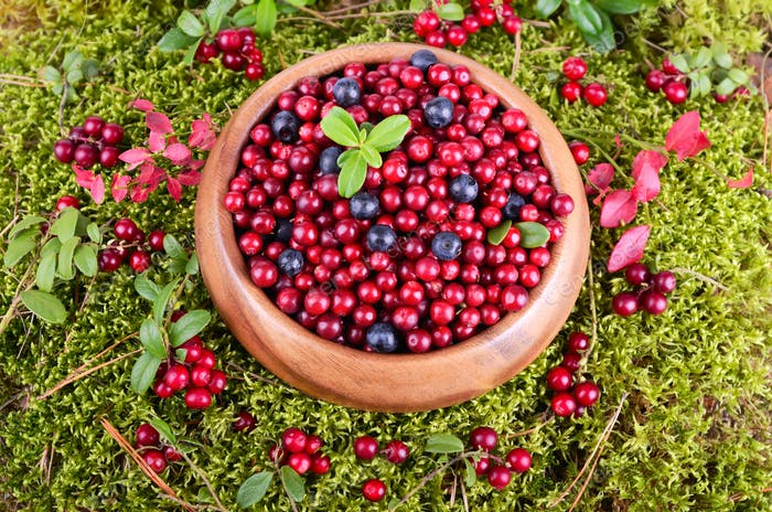 Autumn berrys in moss