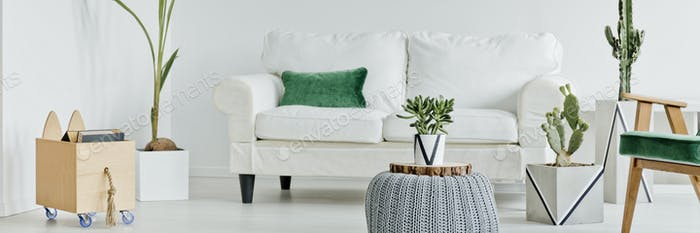 Living room with sofa and cactuses