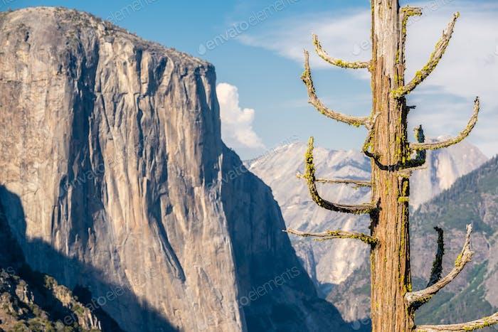 Yosemite Nationalpark Tal Sommerlandschaft