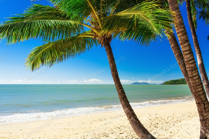 Single palm tree at Palm Cove beach, north Queensland, Australia