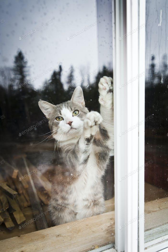 Ich will raus!!!