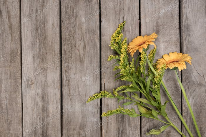 Close-up view of beautiful yellow blossom flowers on wooden background