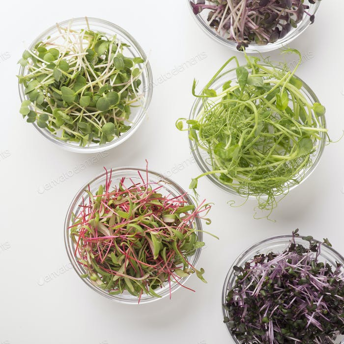 Glass plates with different types of microgreens on white