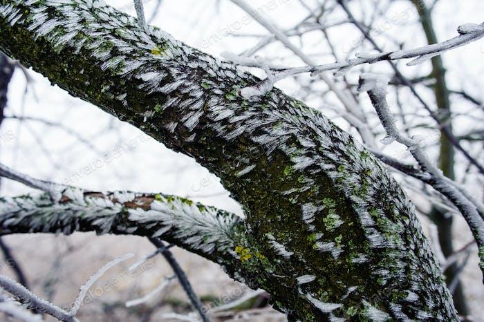 Bäume im nebligen Dunst